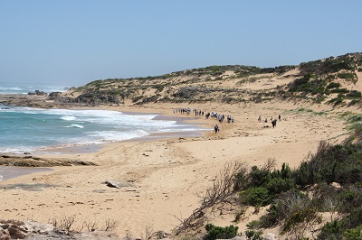 Shelly Beach clean-up